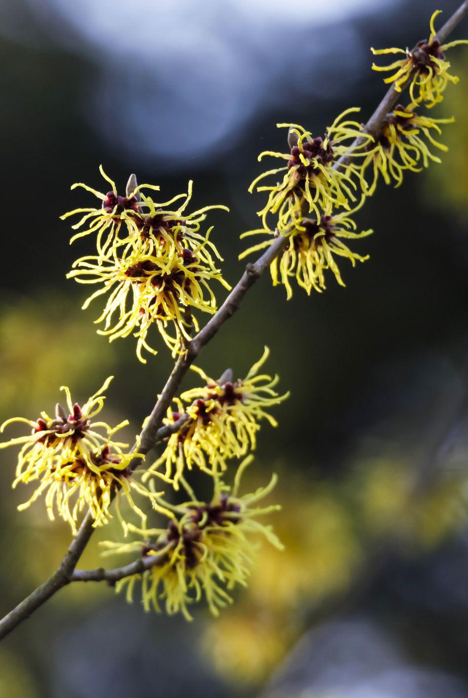 13 loại hoa xứng đáng mọc trong khu vườn nhà bạn trong mùa thu này   - Ảnh 5.
