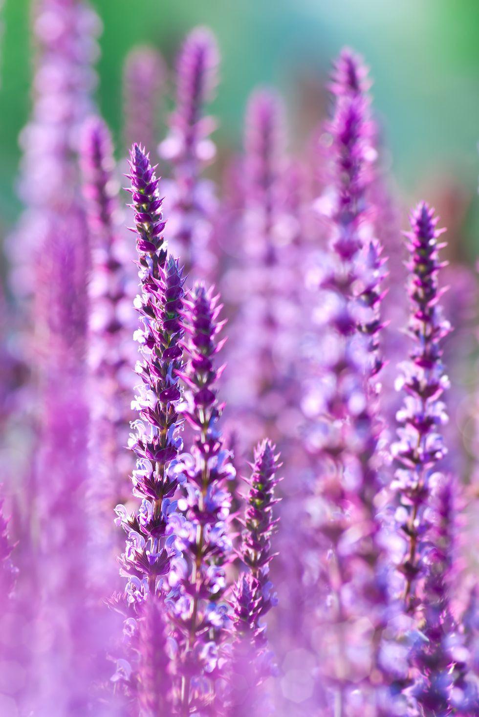 13 loại hoa xứng đáng mọc trong khu vườn nhà bạn trong mùa thu này   - Ảnh 7.