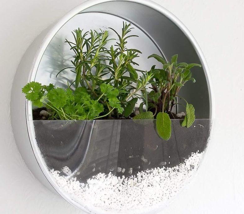 15 ý tưởng cho thấy chỗ nào trong nhà bạn cũng có thể trồng cây gia vị siêu xinh  - Ảnh 12.