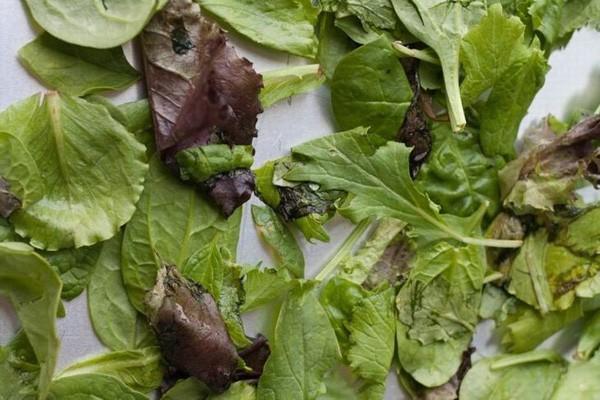 Trước khi cho các loại rau vào tủ lạnh, chị em nhớ thêm 1 thao tác này để rau cả tuần vẫn tươi như mới - Ảnh 2.