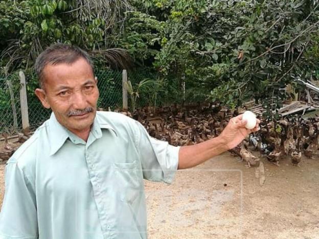 Góc làm giàu không khó: Khởi nghiệp từ 50 con vịt, cặp vợ chồng kiếm gần 70 triệu đồng mỗi tháng nhờ bán trứng vịt - Ảnh 1.