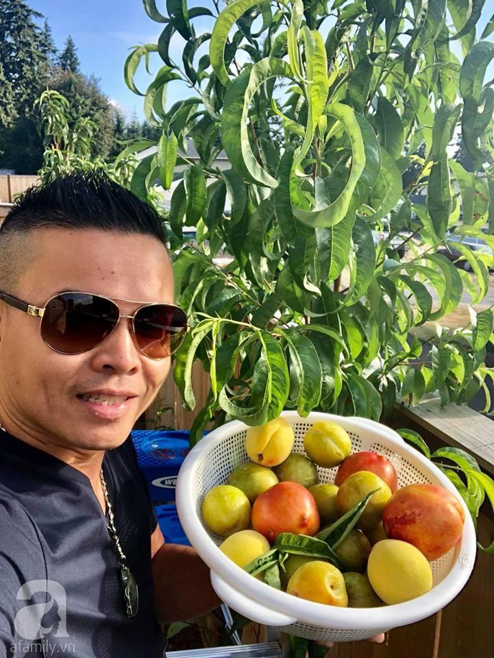 Khu vườn rộng 3.500m² ngập tràn hoa quả của ông chủ tiệm nail người Việt thành đạt trên đất Mỹ 2