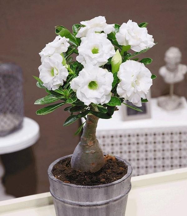 Ngất ngây với 15 chậu hoa bonsai mini siêu đẹp để trang trí nhà dịp Tết - Ảnh 9.
