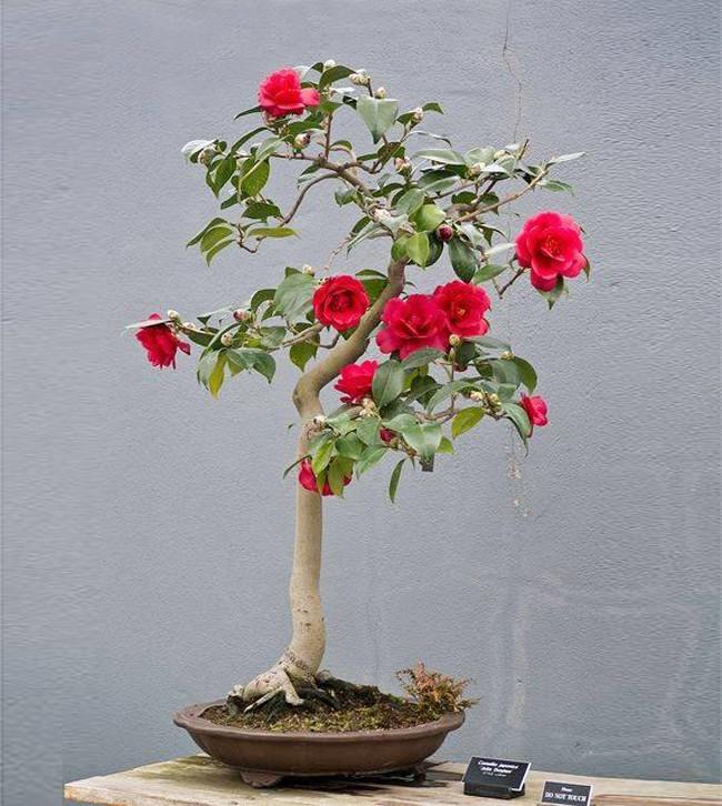 Ngất ngây với 15 chậu hoa bonsai mini siêu đẹp để trang trí nhà dịp Tết - Ảnh 5.