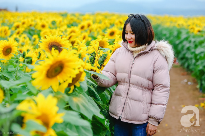 Ngắm cánh đồng hoa hướng dương bạt ngàn hút mắt, vàng rực kiêu hãnh trong cơn mưa đầu xuân - Ảnh 15.