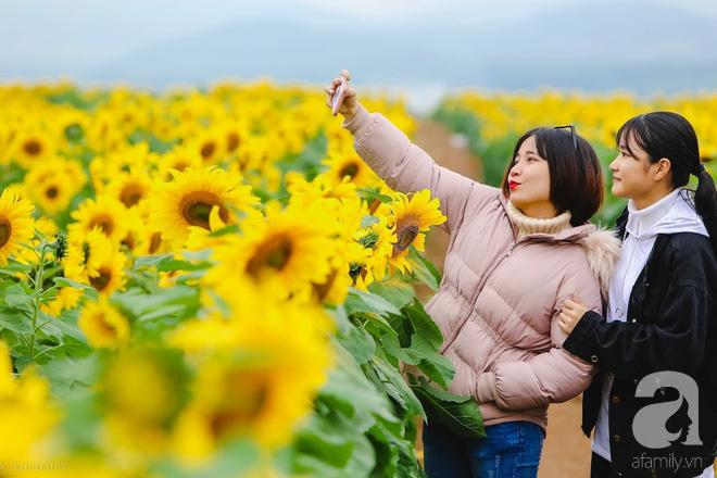 Ngắm cánh đồng hoa hướng dương bạt ngàn hút mắt, vàng rực kiêu hãnh trong cơn mưa đầu xuân - Ảnh 16.