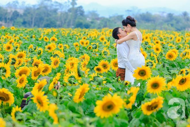 Ngắm cánh đồng hoa hướng dương bạt ngàn hút mắt, vàng rực kiêu hãnh trong cơn mưa đầu xuân - Ảnh 14.