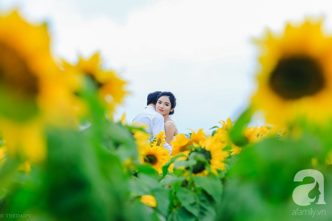 Ngắm cánh đồng hoa hướng dương bạt ngàn hút mắt, vàng rực kiêu hãnh trong cơn mưa đầu xuân - Ảnh 13.