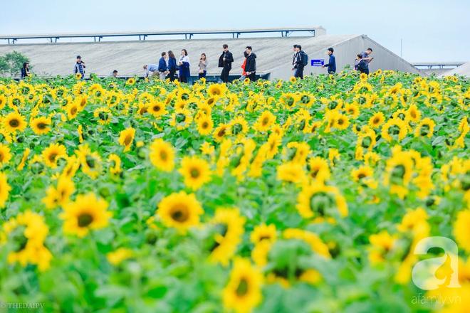 Ngắm cánh đồng hoa hướng dương bạt ngàn hút mắt, vàng rực kiêu hãnh trong cơn mưa đầu xuân - Ảnh 6.