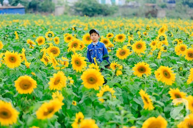 Ngắm cánh đồng hoa hướng dương bạt ngàn hút mắt, vàng rực kiêu hãnh trong cơn mưa đầu xuân - Ảnh 17.