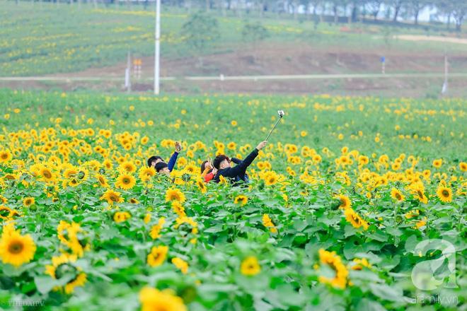 Ngắm cánh đồng hoa hướng dương bạt ngàn hút mắt, vàng rực kiêu hãnh trong cơn mưa đầu xuân - Ảnh 7.