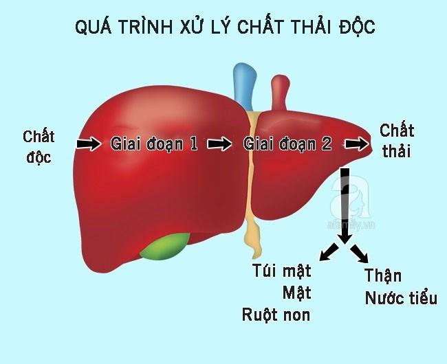 10 dấu hiệu cho thấy gan đang phải làm việc quá tải và chứa đầy độc tố, dễ phát triển thành gan nhiễm mỡ - Ảnh 10.