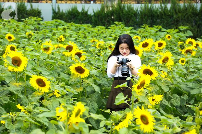Những ngày mùa đông này, đã có khu vườn ngàn mặt trời nhỏ ở Hà Nội cho chị em chụp ảnh làm vui - ảnh 9