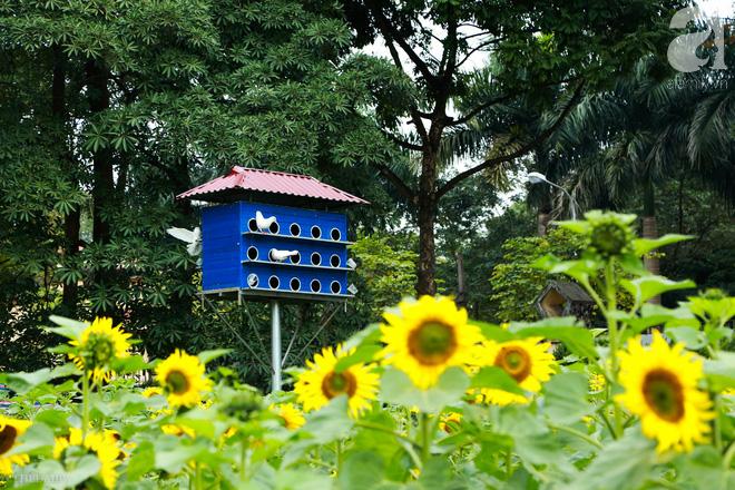 Những ngày mùa đông này, đã có khu vườn ngàn mặt trời nhỏ ở Hà Nội cho chị em chụp ảnh làm vui - ảnh 13