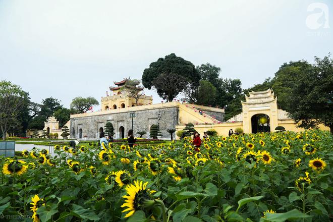 Những ngày mùa đông này, đã có khu vườn ngàn mặt trời nhỏ ở Hà Nội cho chị em chụp ảnh làm vui - ảnh 1