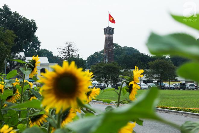 Những ngày mùa đông này, đã có khu vườn ngàn mặt trời nhỏ ở Hà Nội cho chị em chụp ảnh làm vui - ảnh 2