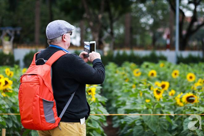 Những ngày mùa đông này, đã có khu vườn ngàn mặt trời nhỏ ở Hà Nội cho chị em chụp ảnh làm vui - ảnh 6