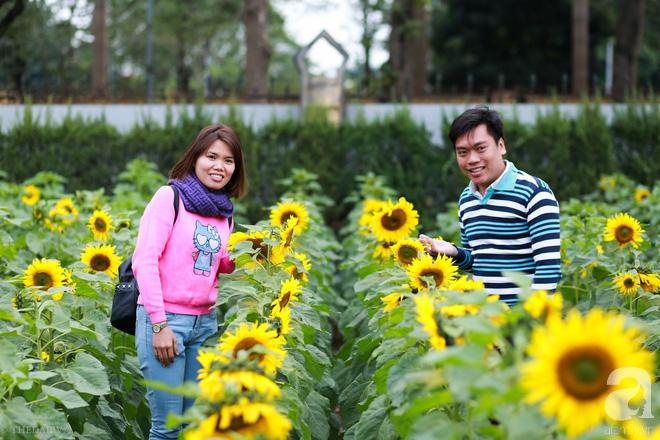 Những ngày mùa đông này, đã có khu vườn ngàn mặt trời nhỏ ở Hà Nội cho chị em chụp ảnh làm vui - ảnh 7