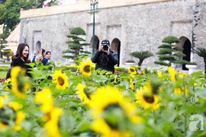 Những ngày mùa đông này, đã có khu vườn ngàn mặt trời nhỏ ở Hà Nội cho chị em chụp ảnh làm vui - ảnh 5