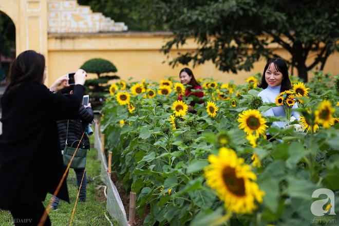 Những ngày mùa đông này, đã có khu vườn ngàn mặt trời nhỏ ở Hà Nội cho chị em chụp ảnh làm vui - ảnh 4