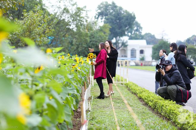Những ngày mùa đông này, đã có khu vườn ngàn mặt trời nhỏ ở Hà Nội cho chị em chụp ảnh làm vui - ảnh 3
