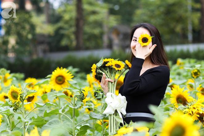 Những ngày mùa đông này, đã có khu vườn ngàn mặt trời nhỏ ở Hà Nội cho chị em chụp ảnh làm vui - ảnh 11