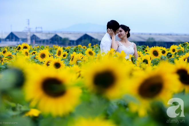 Ngắm cánh đồng hoa hướng dương bạt ngàn hút mắt, vàng rực kiêu hãnh trong cơn mưa đầu xuân - Ảnh 12.