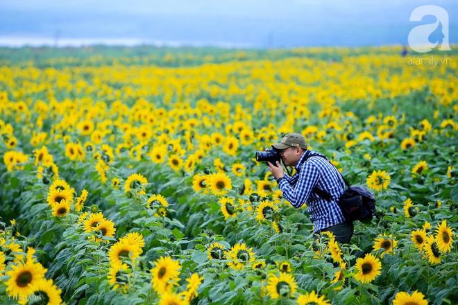 Ngắm cánh đồng hoa hướng dương bạt ngàn hút mắt, vàng rực kiêu hãnh trong cơn mưa đầu xuân - Ảnh 9.