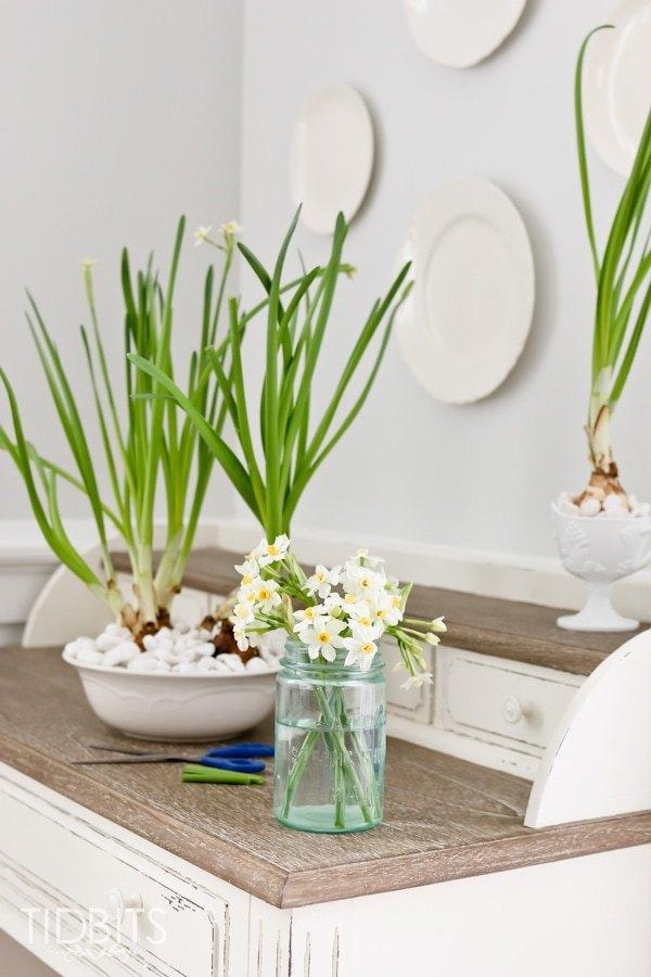 Cách trồng thủy tiên bằng củ không cần đất để trang trí nhà đón Tết, trồng ngay từ bây giờ để ra hoa đúng thời điểm - Ảnh 12.