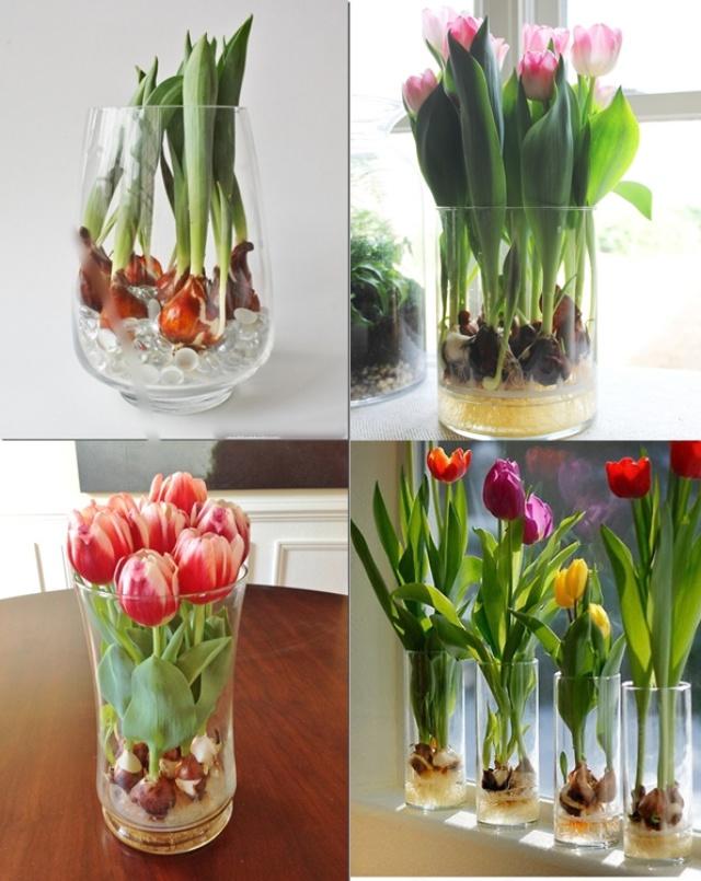 Sở hữu một bình hoa Tulip cực đẹp vào dịp Tết bằng cách trồng từ nước đơn giản như này - Ảnh 1.
