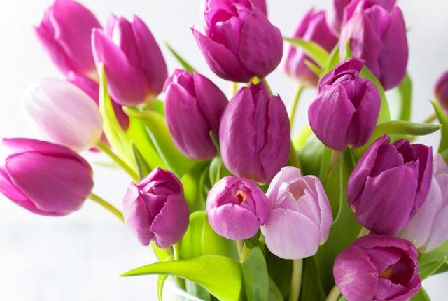 Sở hữu một bình hoa Tulip cực đẹp vào dịp Tết bằng cách trồng từ nước đơn giản như này - Ảnh 2.