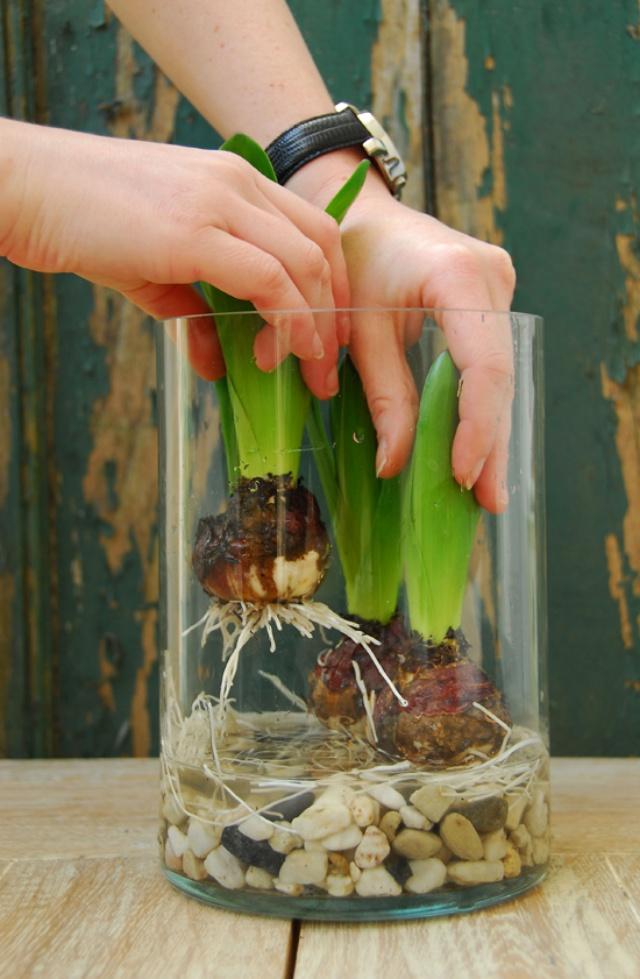 Sở hữu một bình hoa Tulip cực đẹp vào dịp Tết bằng cách trồng từ nước đơn giản như này - Ảnh 7.