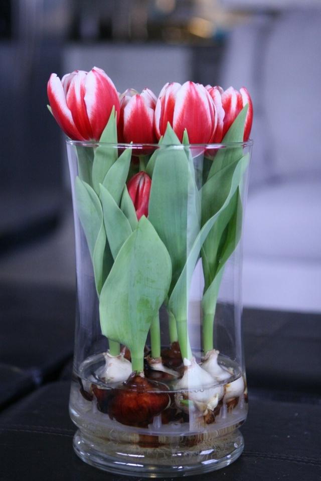 Sở hữu một bình hoa Tulip cực đẹp vào dịp Tết bằng cách trồng từ nước đơn giản như này - Ảnh 9.