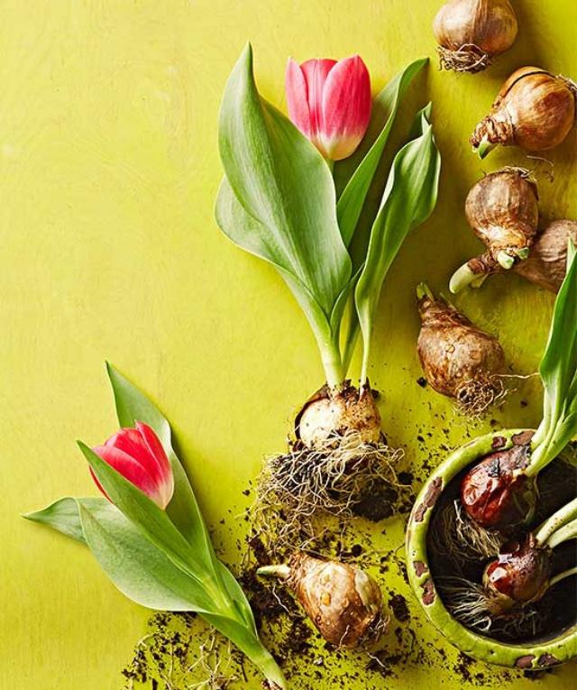 Sở hữu một bình hoa Tulip cực đẹp vào dịp Tết bằng cách trồng từ nước đơn giản như này - Ảnh 10.
