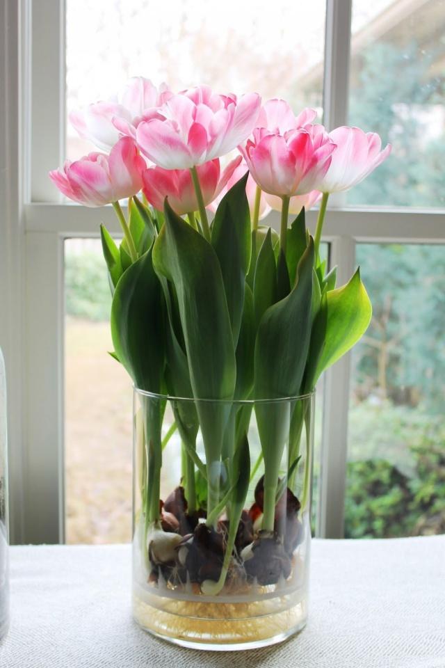Sở hữu một bình hoa Tulip cực đẹp vào dịp Tết bằng cách trồng từ nước đơn giản như này - Ảnh 11.
