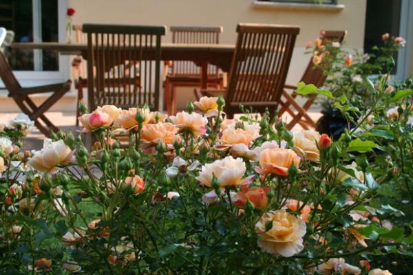 Rộn ràng hương sắc xuân trong sân vườn nhờ những ý tưởng làm đẹp sáng tạo - Ảnh 7.