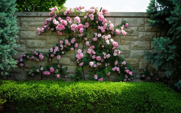Rộn ràng hương sắc xuân trong sân vườn nhờ những ý tưởng làm đẹp sáng tạo - Ảnh 15.
