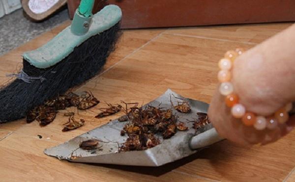 Bí mật của căn bếp sạch bong không có một con gián nhờ công thức đơn giản này - Ảnh 6.