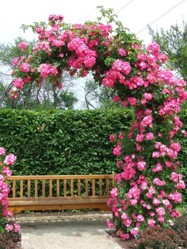 Những khu vườn trở nên lãng mạn và ngọt ngào nhờ cổng vòm rực rỡ sắc hoa - Ảnh 6.