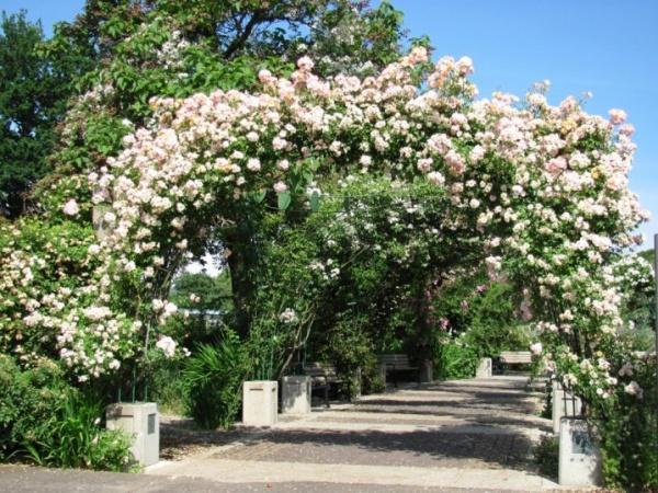 Những khu vườn trở nên lãng mạn và ngọt ngào nhờ cổng vòm rực rỡ sắc hoa - Ảnh 7.