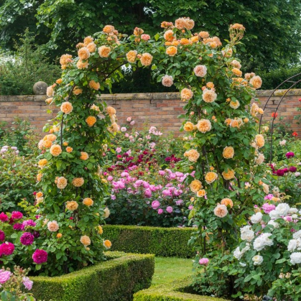 Những khu vườn trở nên lãng mạn và ngọt ngào nhờ cổng vòm rực rỡ sắc hoa - Ảnh 8.