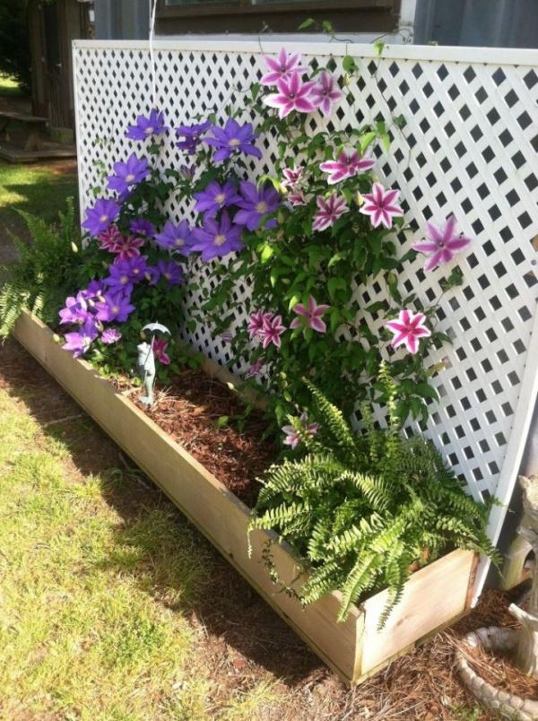 Những mẹo nhỏ giúp cây hoa ông lão trở thành điểm nhấn duyên dáng đặc biệt cho khu vườn - Ảnh 9.