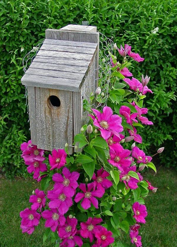 Những mẹo nhỏ giúp cây hoa ông lão trở thành điểm nhấn duyên dáng đặc biệt cho khu vườn - Ảnh 10.