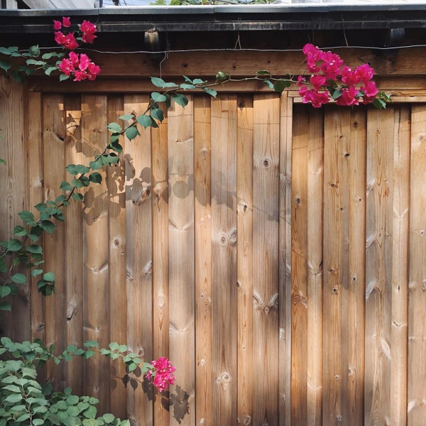 Góc vườn đẹp nên thơ và bí quyết trồng hồng nở rực rỡ của người đẹp Tăng Thanh Hà - Ảnh 8.