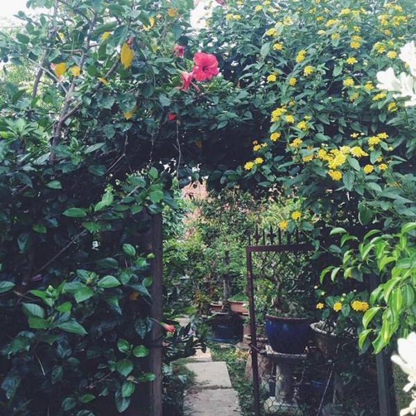 Góc vườn đẹp nên thơ và bí quyết trồng hồng nở rực rỡ của người đẹp Tăng Thanh Hà - Ảnh 11.