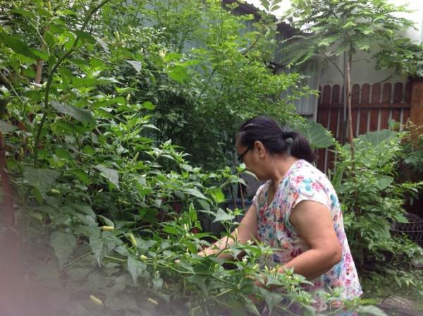 Góc vườn đẹp nên thơ và bí quyết trồng hồng nở rực rỡ của người đẹp Tăng Thanh Hà - Ảnh 12.