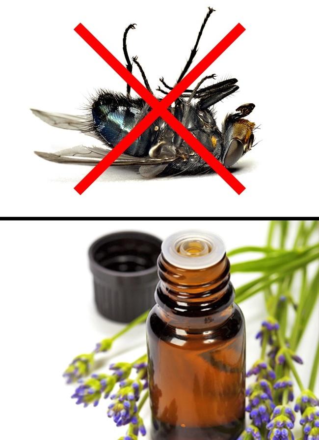 """Những cách tuyệt hay """"đánh bay"""" côn trùng khỏi ngôi nhà của bạn - Ảnh 3."""