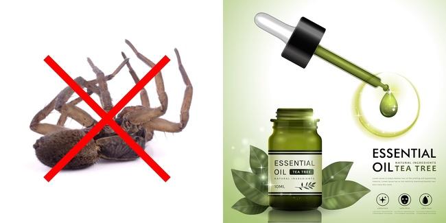 """Những cách tuyệt hay """"đánh bay"""" côn trùng khỏi ngôi nhà của bạn - Ảnh 6."""
