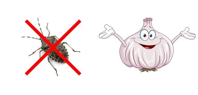 """Những cách tuyệt hay """"đánh bay"""" côn trùng khỏi ngôi nhà của bạn - Ảnh 8."""