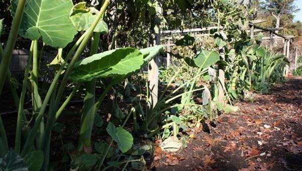 Vườn rau rộng tới 8000m² giữa thủ đô nước Mỹ của người phụ nữ Việt - Ảnh 4.